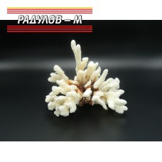 Корали / 4451